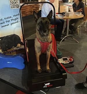 Schaeferhund-auf-dem-Dogpacer
